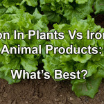 Vegan Iron Vs Iron In Animal Products: What's Best?