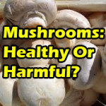 Mushrooms: Beneficial Or Harmful?