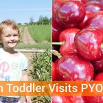 Vegan Toddler Visits Pick Your Own Farm In England + A Salad Recipe!
